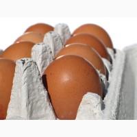 Яйца куриные С1 оптом. и мелким оптом