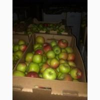 Яблоки оптом Ред Фри