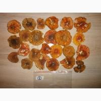 Продам мухомор сушеный - целебный и вкусный