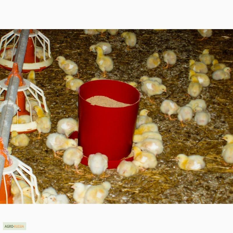 Фото кормушек для цыплят своими руками
