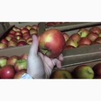 Сладкие яблоки оптом со склада в Иркутске