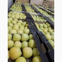 Продам яблоки оптом НДС в цене