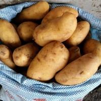 Картофель продовольственный со склада