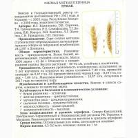 Семена озимой пшеницы сорт Ермак