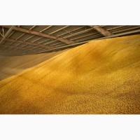 Пшеница 5, 4, 3 кл. Опт/крупный опт
