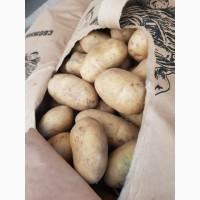 Продам картофель молодой из Азербайджана