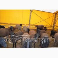 Овчарня, каркасно-тентовая конструкция