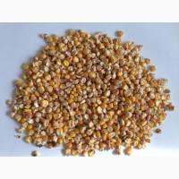 Кукуруза. Экспорт из России