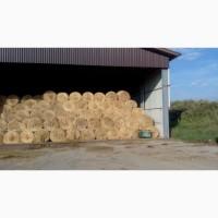 Солома (пшеничная, ячменная, овсяная)