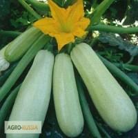 Искандер F1, семена кабачков, 1 000 шт. (Семинис)