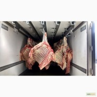 Мясо оптом