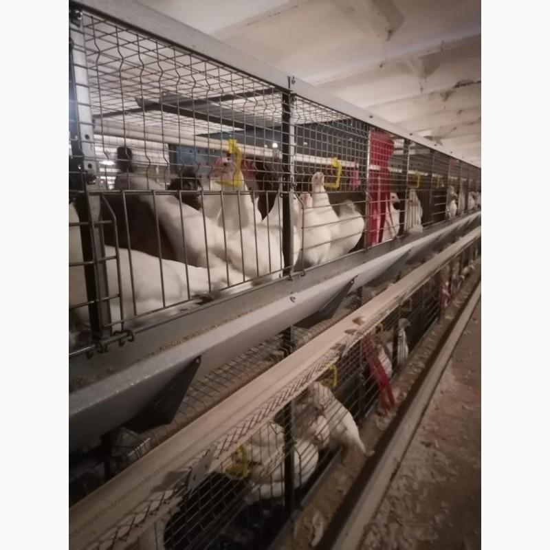 выборе оршанская газета фото птицефабрики созданию текстильной
