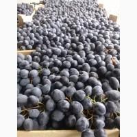 Виноград с Молдовы