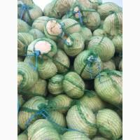 Продаем капусту белокачанную 8рублей