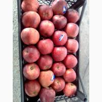 Яблоки Ред Турция