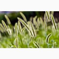 Семена кормовых трав на сено