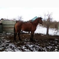 Продам лошадей
