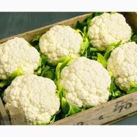 Оптовая продажа цветной капусты с доставкой