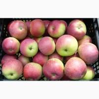 Яблоки Бородинка с доставкой по России