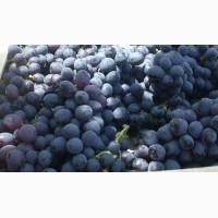 Виноград Чиллаки готов к оптовым заказам по выгодной цене