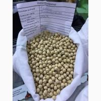 Продажа гороха посевного сорта Ямальский