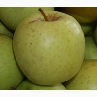 Продаем яблоки Айдаред, Голден, Гала