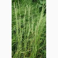 ООО НПП «Зарайские семена» закупает семена: райграс однолетний от 5 тонн