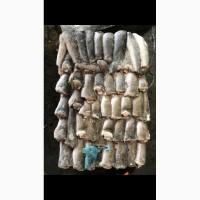 Свежемороженая рыба в ассортименте Экспорт