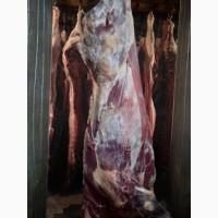 ООО Сантарин, реализует мясо говядины, быки, коровы, баранину, Халяль