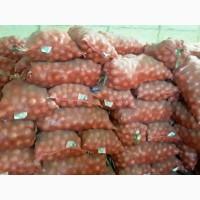 Продаем лук репчатый, сорт Манас