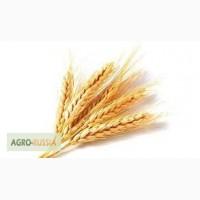 Продам Пшеницу 5 кл