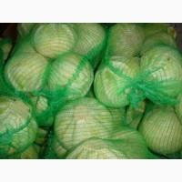 Продаём капусту из Беларуси