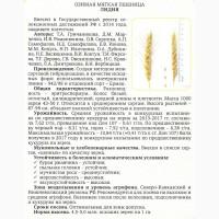 Семена озимой пшеницы урожая 2018 сорт Лидия