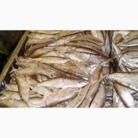 Продам рыбу св/м речную-озёрную