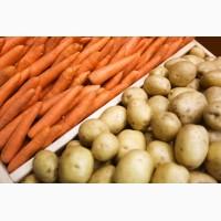 Закупаем картофель, морковь