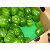 Предлагаем приобрести оптом партию зеленого болгарского перца