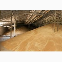 Экспорт пшеницы 5 кл в Иран