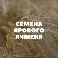Продам семена ярового ячменя на посев