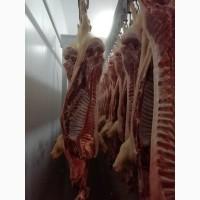 Продаем полутуши свиные, субпродукты, разделку