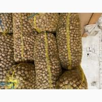 Продаю грецкие орехи