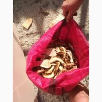 Продам Белый гриб соленый и маринованный