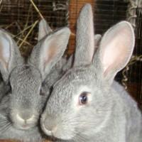 Комбикорм ПЗК 91 для кроликов