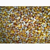 Кукуруза фуражная 3200 тонн (Волгоград)
