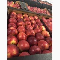 Купим яблоки от 20 тонн партия