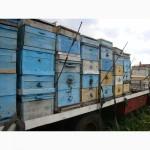 Продажа пчелопакетов Майкоп