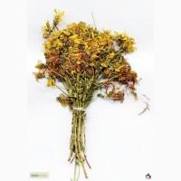 Продаем травы, корни, орехи, панты