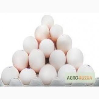 Закупаем яйцо куриное С2, С3