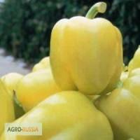 Семена перца Халиф F1 (Саката)