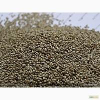 Продам:Семена тимофеевки ВИК 9