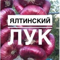Продам оптом ЯЛТИНСКИЙ лук